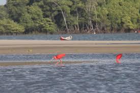 Óleo no litoral de Cururupu